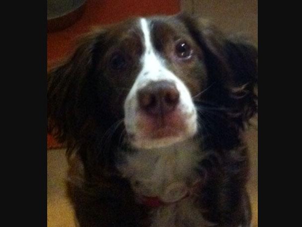 Camilla (ex Mamy) è stata adottata!