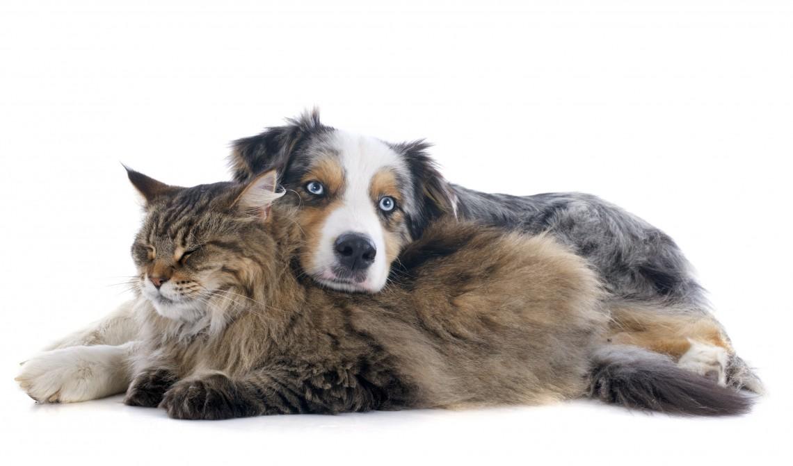adottare a distanza cani e gatti