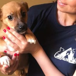 5 cuccioli da salvare – Emergenza Palermo