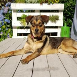 Il cucciolo Ramses è stato adottato!