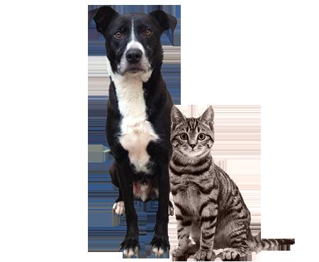adozione a distanza cani e gatti