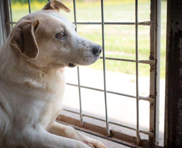 Salva un cane abbandonato - ALFA Associazione Love For Animals