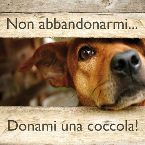 Fai una donazione per un cane abbandonato