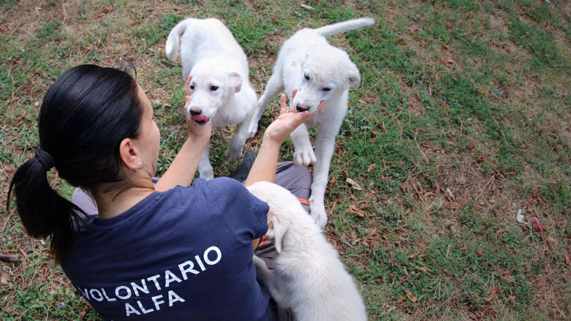 Volontariato Associazione Animali