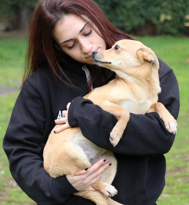 adotta un cane dal canile