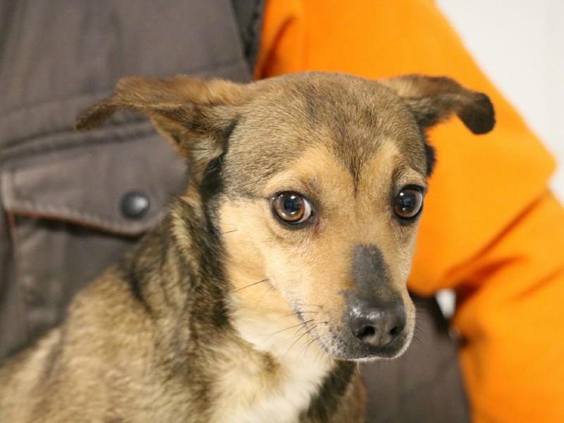 Adotta phennek cane di taglia piccola for Nomi per cani maschi taglia piccola
