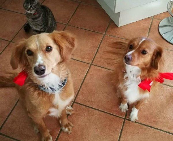 Zippo e Ayla sono stati adottati!