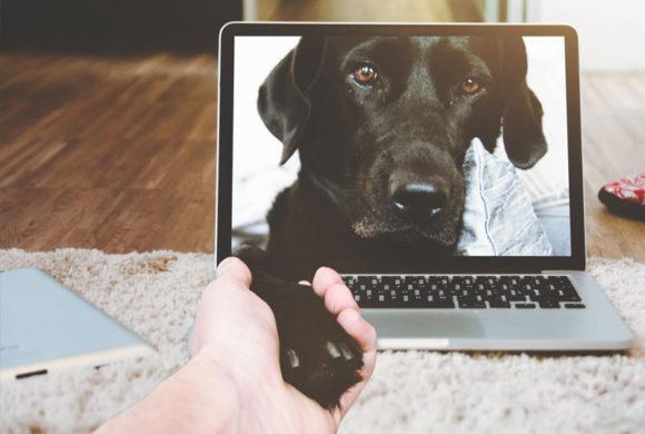 Nasce il nuovo sito tematico GIUSTIZIA ANIMALI