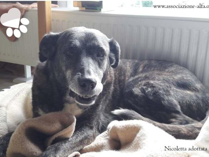 Nicoletta è stata adottata!