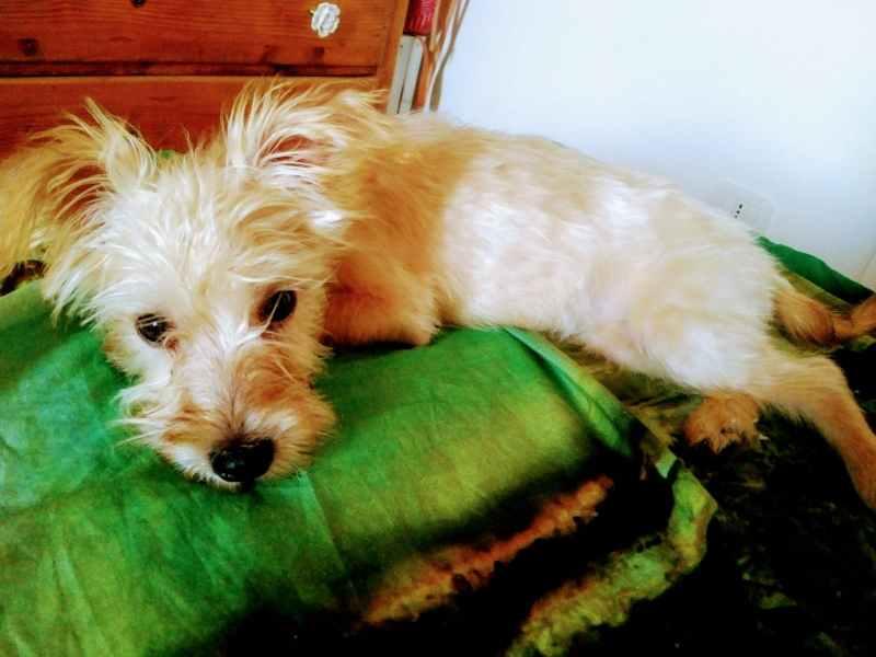 Grazie dai 5 cuccioli salvati a Palermo