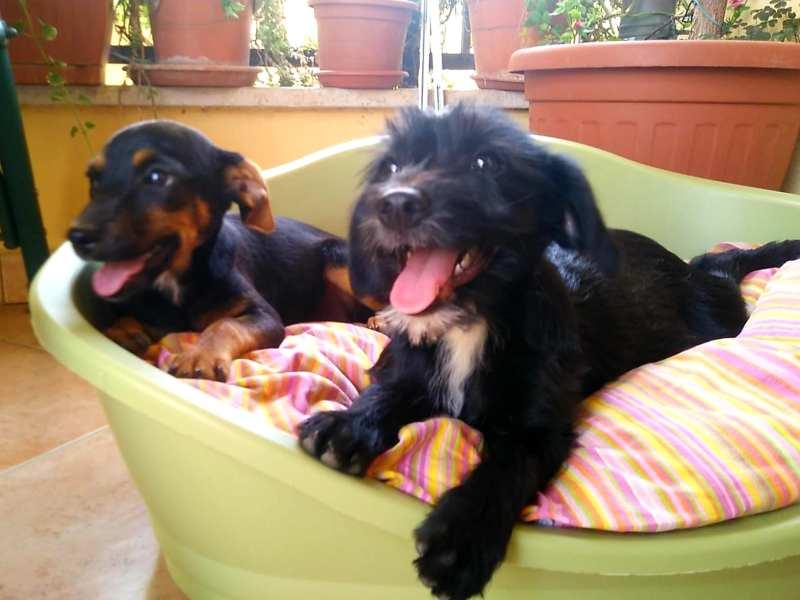 Carla e Carina sono state adottate!