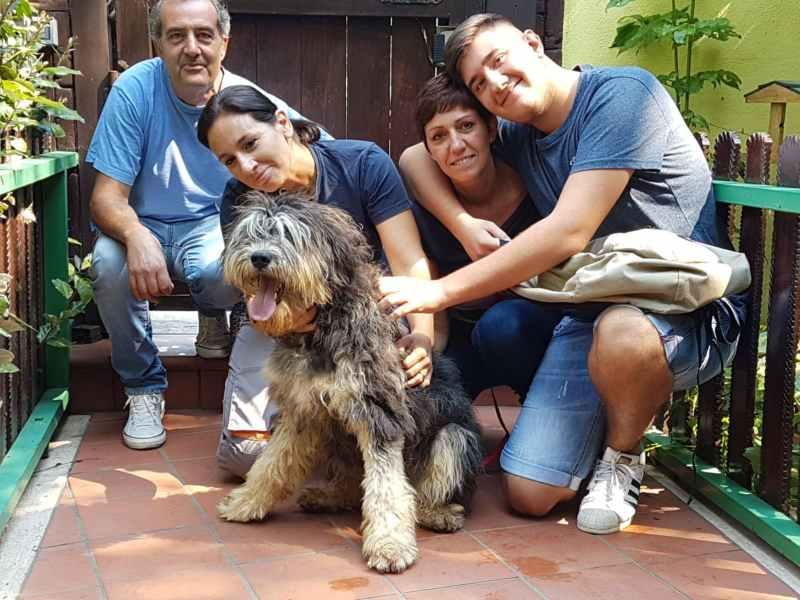Maggiolino è stato adottato!