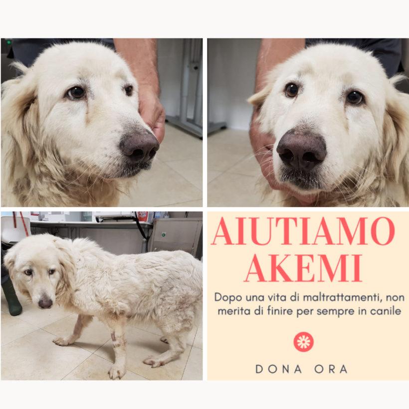 Akemi: raccolta fondi