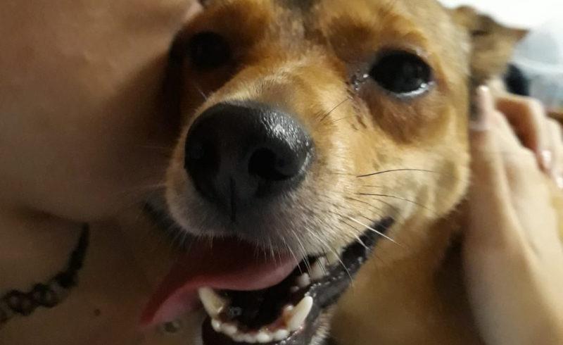 Lettie è stata adottata!