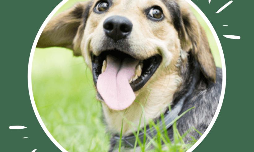 Frosinone: sterilizzazioni gratuite per i cani abbandonati