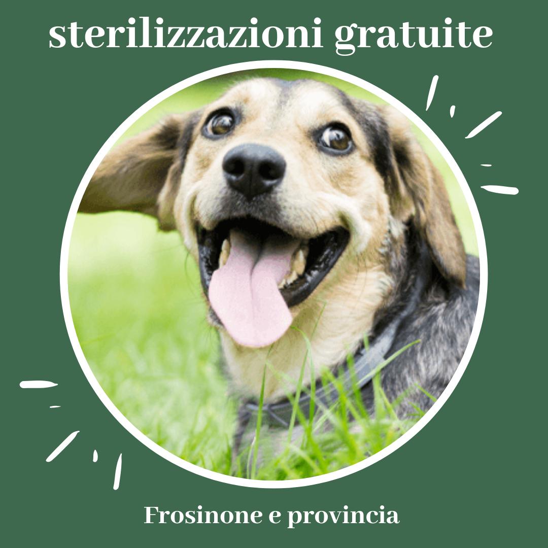Frosinone Sterilizzazioni Gratuite Per I Cani Abbandonati Alfa