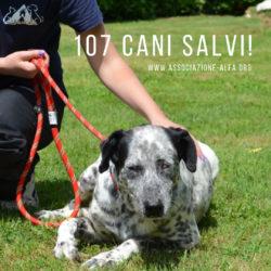 107 cani salvati dal trasferimento!
