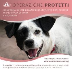 Operazione Protetti: sterilizzazioni gratuite in provincia di Roma e Frosinone