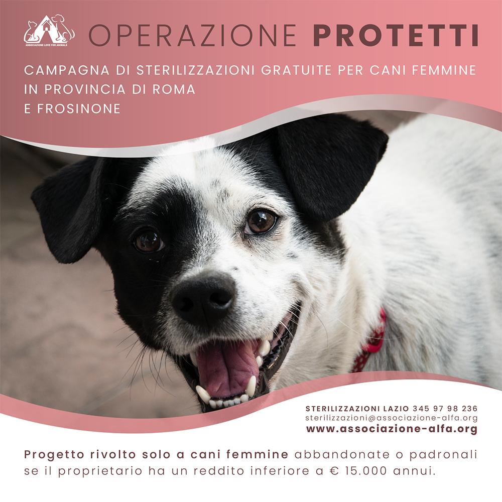 Operazione Protetti Sterilizzazioni Gratuite In Provincia Di Roma E