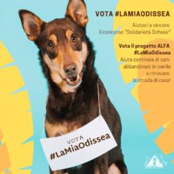 Vota il progetto #LaMiaOdissea