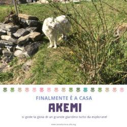#happyend per Akemi, finalmente è a casa!