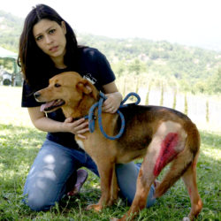 URGENTE! Dorinda la guerriera ha bisogno di aiuto (update 12/09)