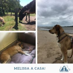 Melissa a casa!