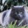 Verdiana gatta adottata nel 2015