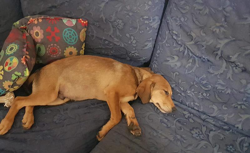 Medoro si è impossessato del divano