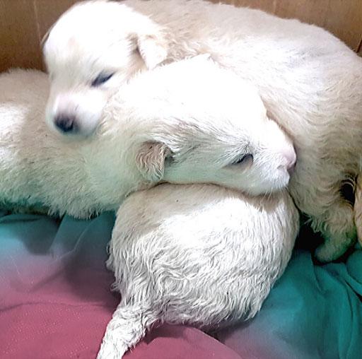 Raccolta fondi: i cuccioli di neve