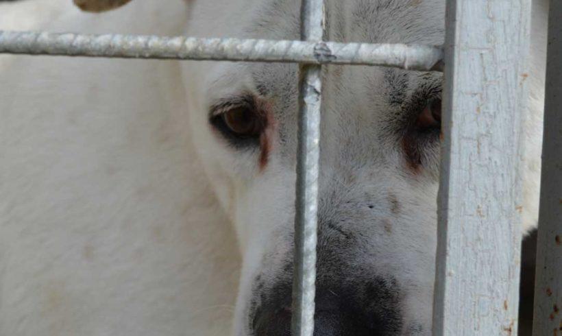 CORONAVIRUS: siamo tutti come cani in gabbia.