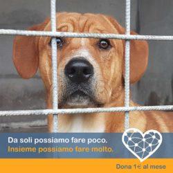 Dona 1€ al mese – Insieme possiamo salvare oltre 400 animali abbandonati