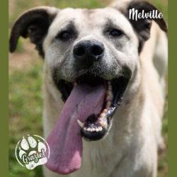 Melville adottato, finalmente è a casa libero e felice!