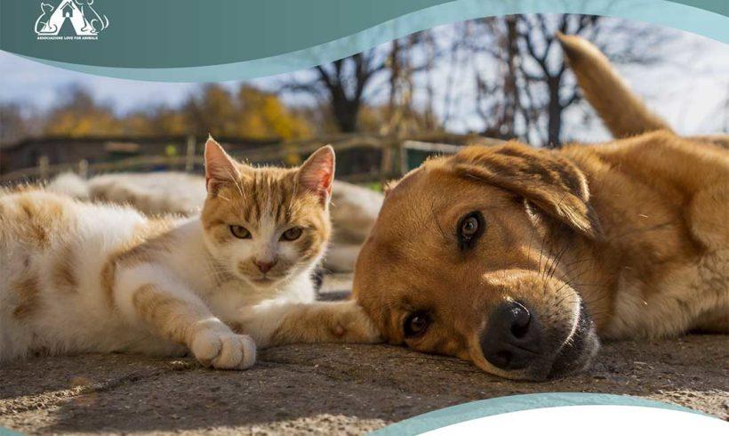 Sterilizzazioni gratuite cani e gatti nel Lazio