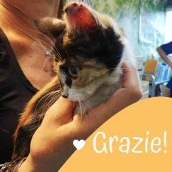 Raccolta fondi: Trilly la gattina