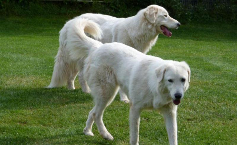 Acilio e Mimma: due cani meglio di uno solo