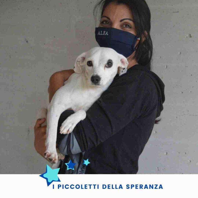 Campagna adozioni per oltre 30 cagnolini sequestrati da maltrattamenti