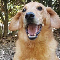 Oggi vi diamo una notizia stupenda: Donatus è stato adottato!