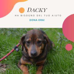 Raccolta fondi per il piccolo Dacky