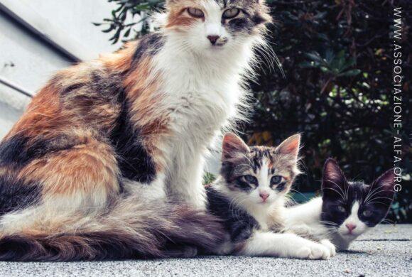 Animal Hoarding: il maltrattamento degli accumulatori di animali
