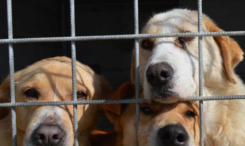 Leishmaniosi canina: preveniamola insieme!