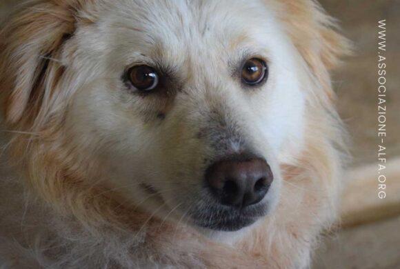 Ehrlichiosi: malattia canina trasmessa dalle zecche