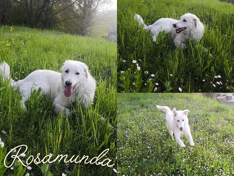 Rosamunda libera
