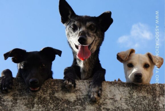 Come si calcola l'età dei cani in anni umani?