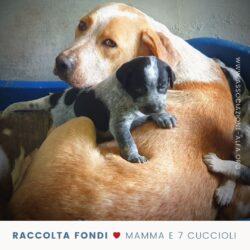 Raccolta fondi: Sarabi e i suoi sette cuccioli