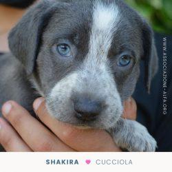 sarabi cuccioli - raccolta fondi