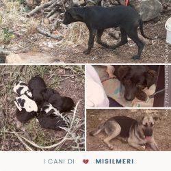 I cani di Misilmeri, in Sicilia