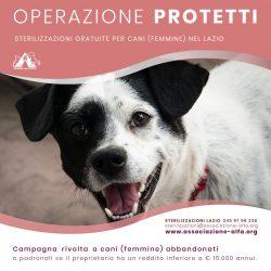 Nuove sterilizzazioni gratuite nel Lazio