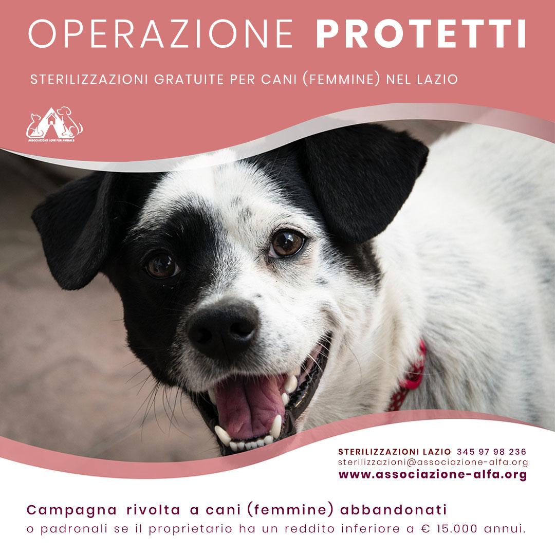 sterilizzazioni gratuite Lazio