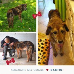 Rastis è stato adottato!